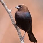 birdcout