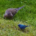 birds_danach