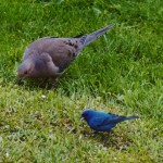birds_davor